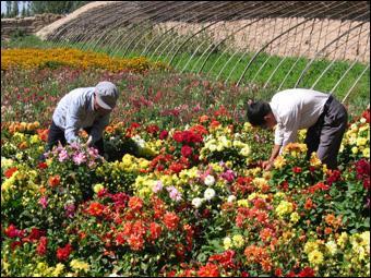 鲜花风景女人图片