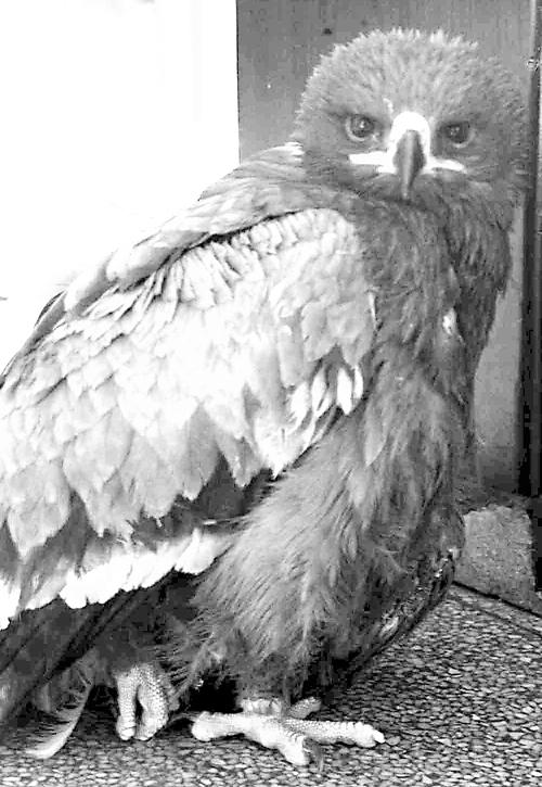 大鸟是国家一级保护动物