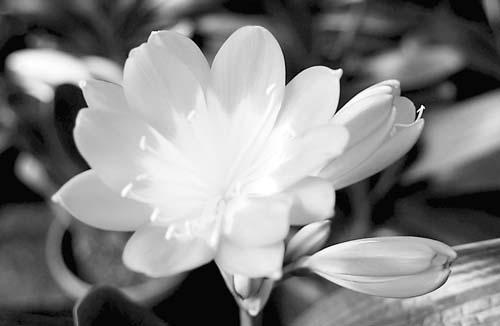 花朵只有六个花瓣儿