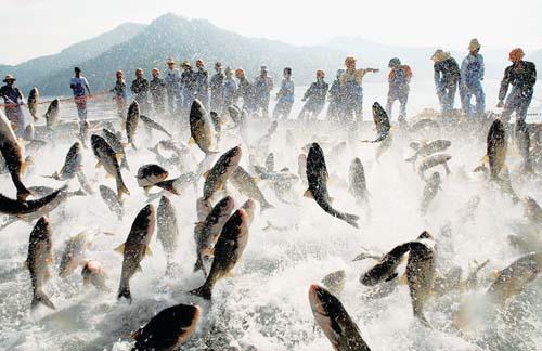 群鱼跃出水面狂舞