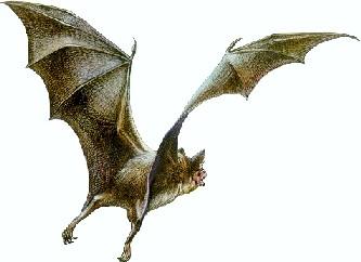 为了弄清楚为什么这种会飞行的哺乳动物会长出如此长