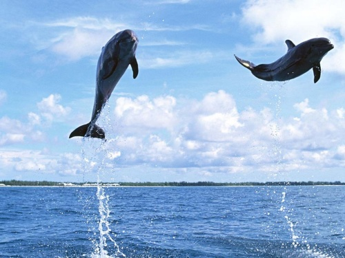 《自然世界》节目中播出,动物学家们在纪录片中宣称,海豚救人的原因有