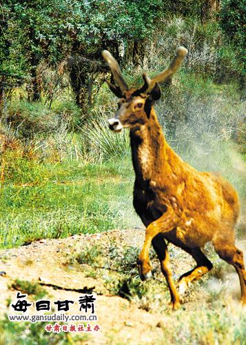 摄影报道:肃北——野生动物的乐园(组图)