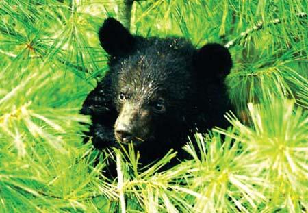白水江国家级自然保护区是我国大熊猫等珍稀动物的主