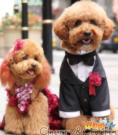 史上最最可爱,最最唯美的结婚照!