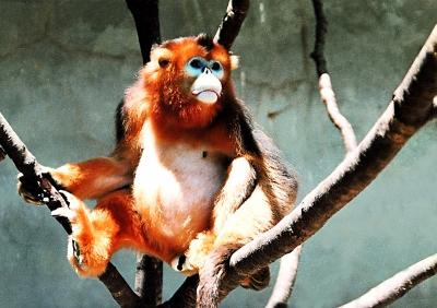 【动物园广播】高清图; 陇南稀有动物--大熊猫,金丝猴,小熊猫; 动物园