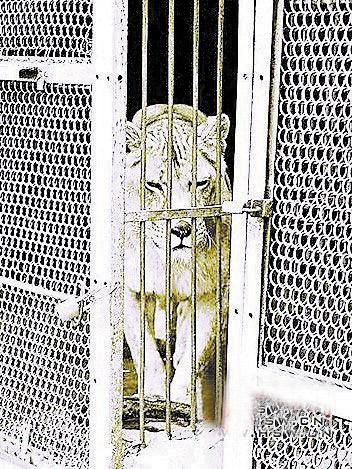 驻马店市南海公园动物园狮子咬死饲养员