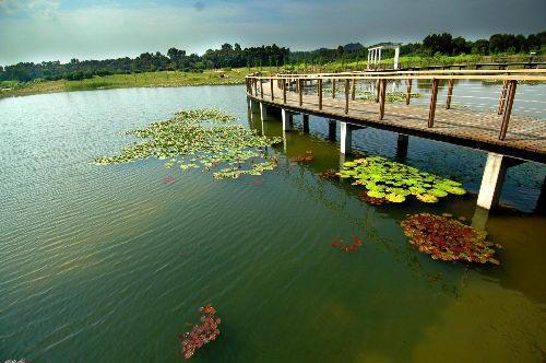 整个湿地公园设野生动物模型展览,仿真湿地场景和娱乐教育设施.