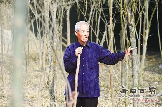 树林老头系列视频影片_老人种的树已经成了一片小树林.本报记者 郁婕