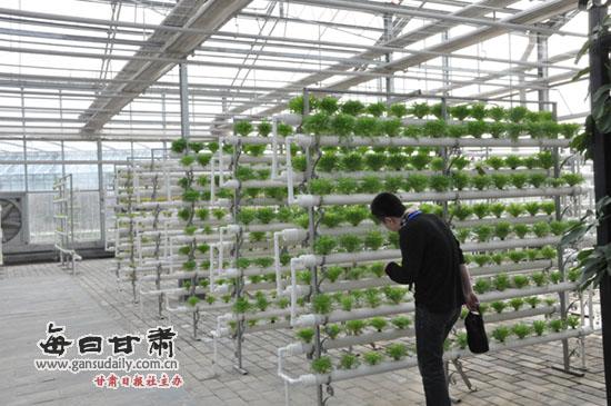 陕西杨凌示范区:感受农科城现代农业的魅力