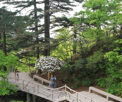 7月1日起教师暑期游黄山风景区门票享受5