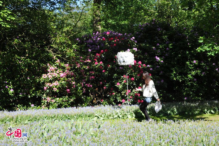 风景 荷兰/郁金香是荷兰的国花,就单单郁金香荷兰就有8100多种。思维摄