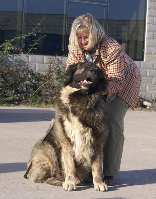 最大/高加索犬:探秘世界上最大的狗