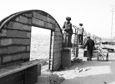 图片新闻:高台县合黎乡钢架大棚葡萄栽培示范区建设
