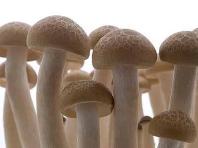 菌菇类图片_菌菇类
