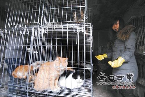 兰州市流浪动物救助站的志愿者在新港城附近