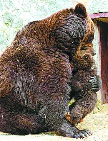 动物总动员熊仔