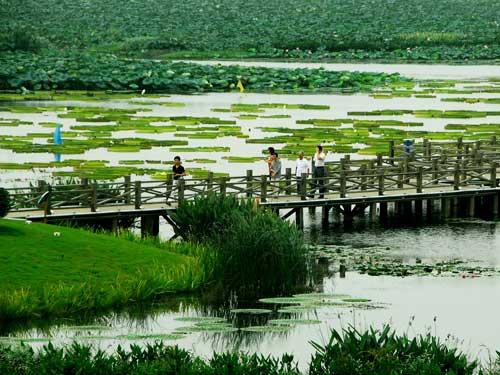 江西湿地公园_江西旅游:鄱阳湖国家湿地公园(组图)-鄱阳湖|湿地-每日甘肃-旅游