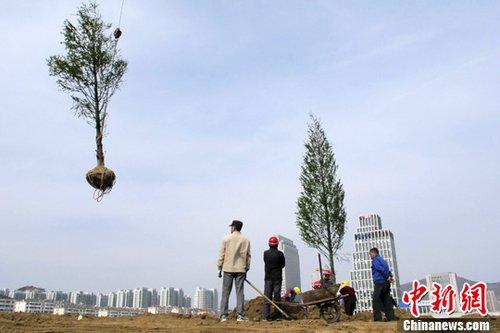 """青岛官方回应大规模""""退坪种树"""" 向市民致歉"""