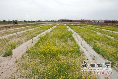 引导农户大力调整农业产业结构;三是
