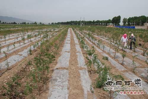 黄羊镇:做好农业产业结构调整的大文章