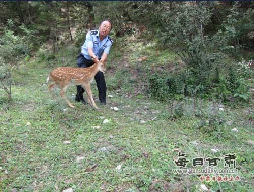 国家一级保护野生动物梅花鹿
