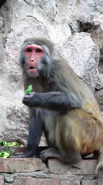 走进兰州动物园 3个大男人围着百只猴子转(组图)