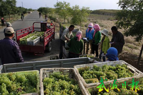 武威特色林果业_葡萄酒产业逐步成为武威农民增收,企业增效,财政增税的特色优势主导