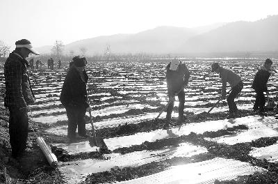 华亭县/3月6日,华亭县安口镇马家堡村20多名留守妇女正抓紧农时进行...