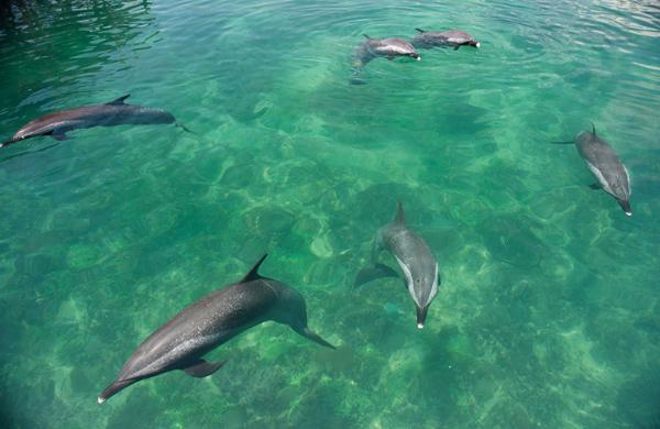 """分界洲岛中国最大珊瑚馆""""五·一""""对游客开放"""