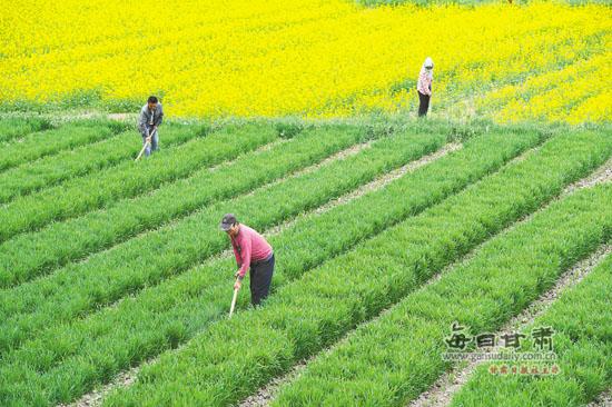 甘州区积极调整优化农业产业结构