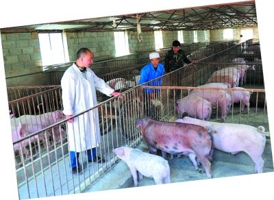 农村经济母猪舍设计图