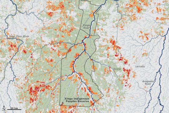 每日卫星照 亚马逊热带雨林火灾