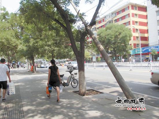 城事映像:皋兰路电线杆倾斜搭在一棵行道树上装修设计师的各个奖项图片