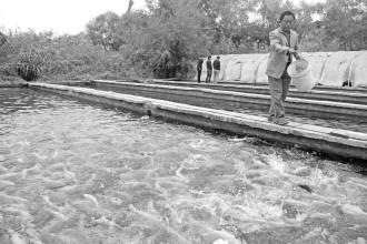 发展特色水产养殖业_