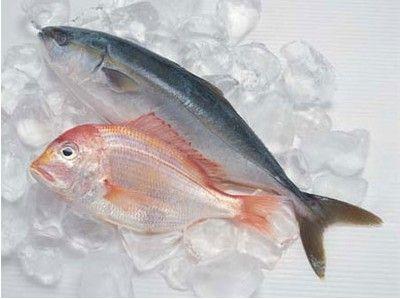 哪些鱼孕妇不能吃