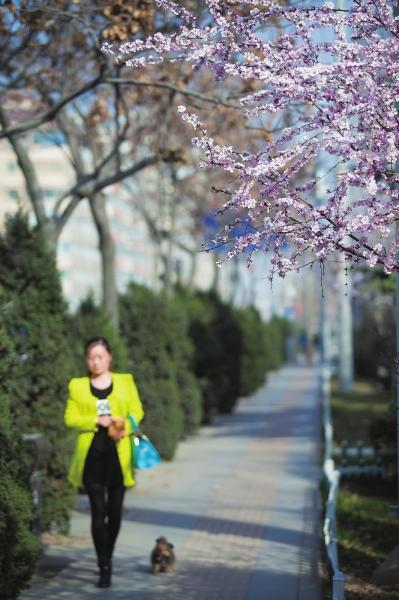 我们在春天里漫步(组图)-春天-每日甘肃-兰州