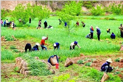 宕昌流转闲置土地 发展特色产业改善生态环境