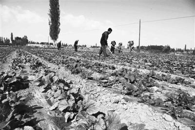 """调整农业产业结构作为""""三农""""工作的突破口"""