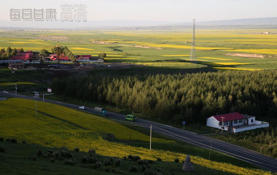 7月14日拍摄的张掖民乐扁都口万亩油菜花盛开美景.通讯员王将摄