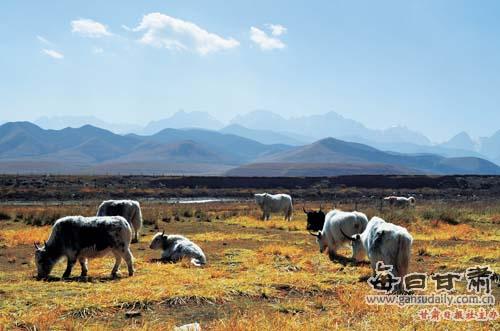 【雪山西部】天祝抓喜秀龙:草原湿地视频构建地理扫二维码看图片
