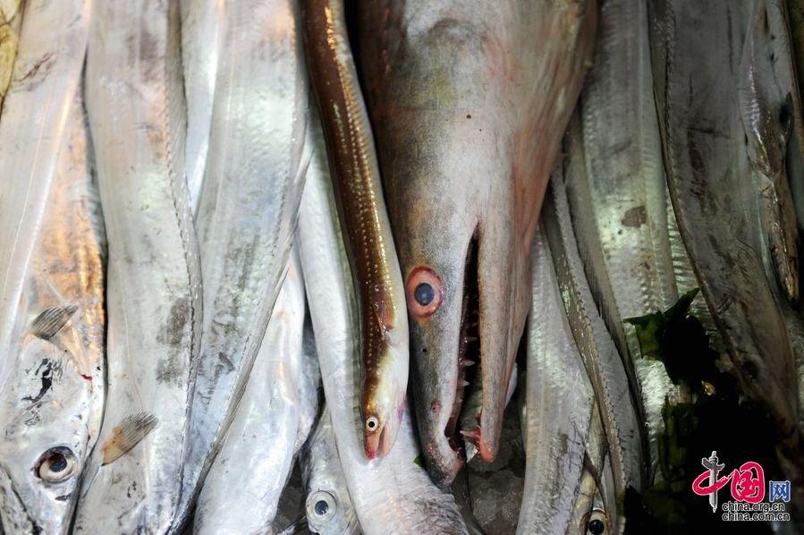 米长巨型海鳗鱼