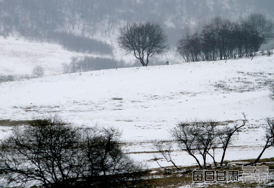 摄影 主题 程泽宇/《静静的山林》(天水市清水县)