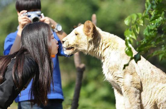 由倪妮、李宇春等人气明星担任嘉宾的湖南卫视原创动物真人秀节目《奇妙的朋友》将于2015年1月17日晚首播。目前节目正在紧张的录制当中,去动物园游玩的旅客意外抓拍到倪妮在动物园中当饲养员与动物们玩的不亦乐乎,并对它们细致照料的瞬间。而且在与动物的相处过程中,倪妮毫不畏惧,连猛兽也敢亲密接触。   日前,有网友发布了倪妮在广州某野生动物园录制湖南卫视真人秀《奇妙的朋友》的照片。照片中,倪妮与其他参与节目的艺人一起换上了统一饲养员服装,正在听编导讲解。据悉,倪妮这次与其他嘉宾,将饲养两只小猩猩并照顾他们的起