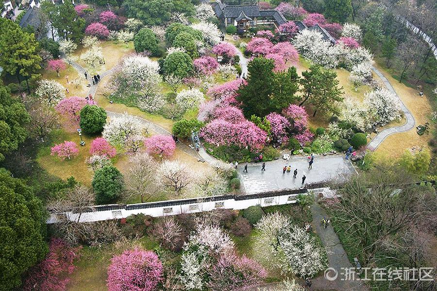 杭州植物园里的花草经过雨水的洗涤,显得那么的清新鲜亮,一团团一簇簇