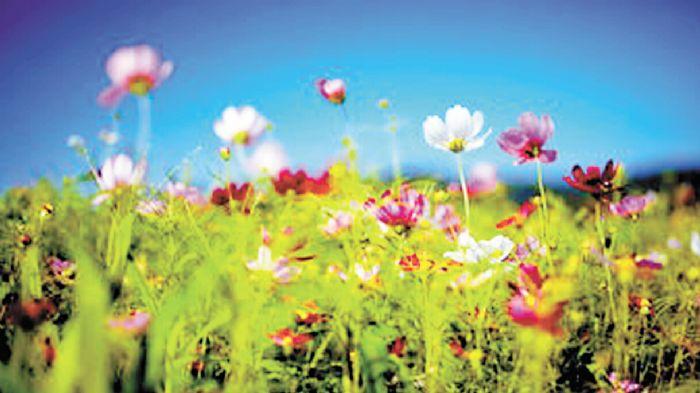 春天是小燕子穿花衣的轻盈