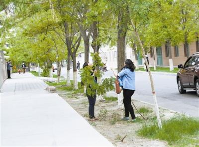5月13日,读者在友谊社区拍摄到的市民攀折树木的一幕.