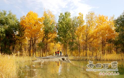 """一期间,金塔县沙漠胡杨林景区的万亩胡杨换上了""""金装"""",引得游"""
