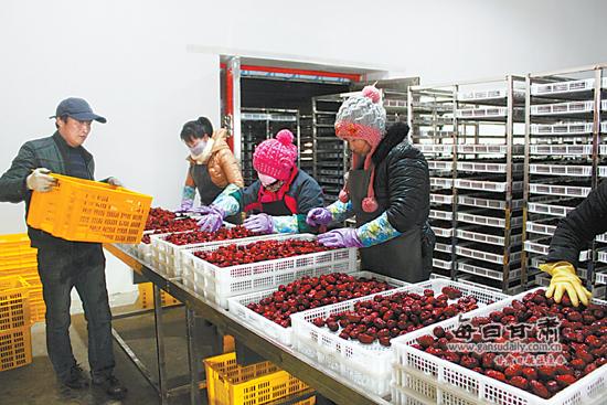 敦煌市大力发展农产品加工业-加工业-每日甘肃