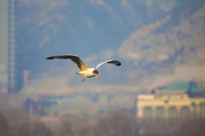 成为候鸟越冬的栖息地